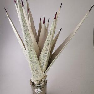 agave in cartamodello con vaso cilindrico di vetro